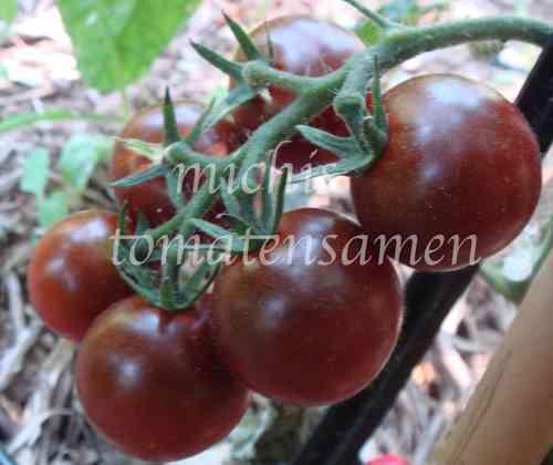 tomatensamen g nstig online bestellen tomaten pflanzen. Black Bedroom Furniture Sets. Home Design Ideas