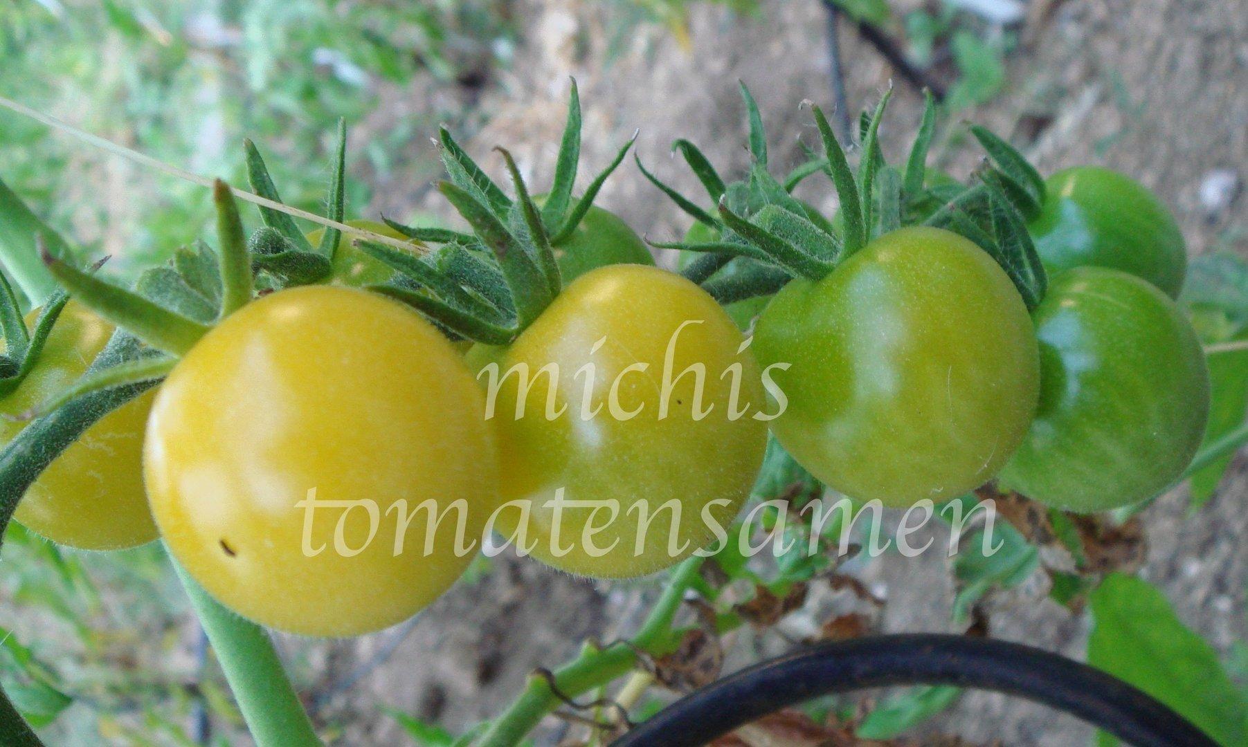 tomate cherry green grape gr n gelbe kirschtomate. Black Bedroom Furniture Sets. Home Design Ideas