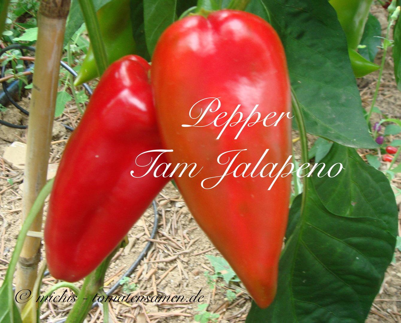pepper tam jalapeno rote chili 10 samen michis. Black Bedroom Furniture Sets. Home Design Ideas