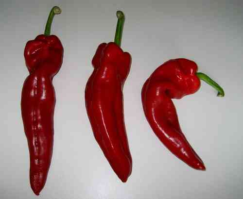 Pepper Melrose Heirloom * Paprika aus italien* rot* 10 Samen